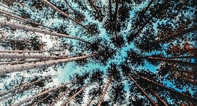 Green Writing Katinger Wald